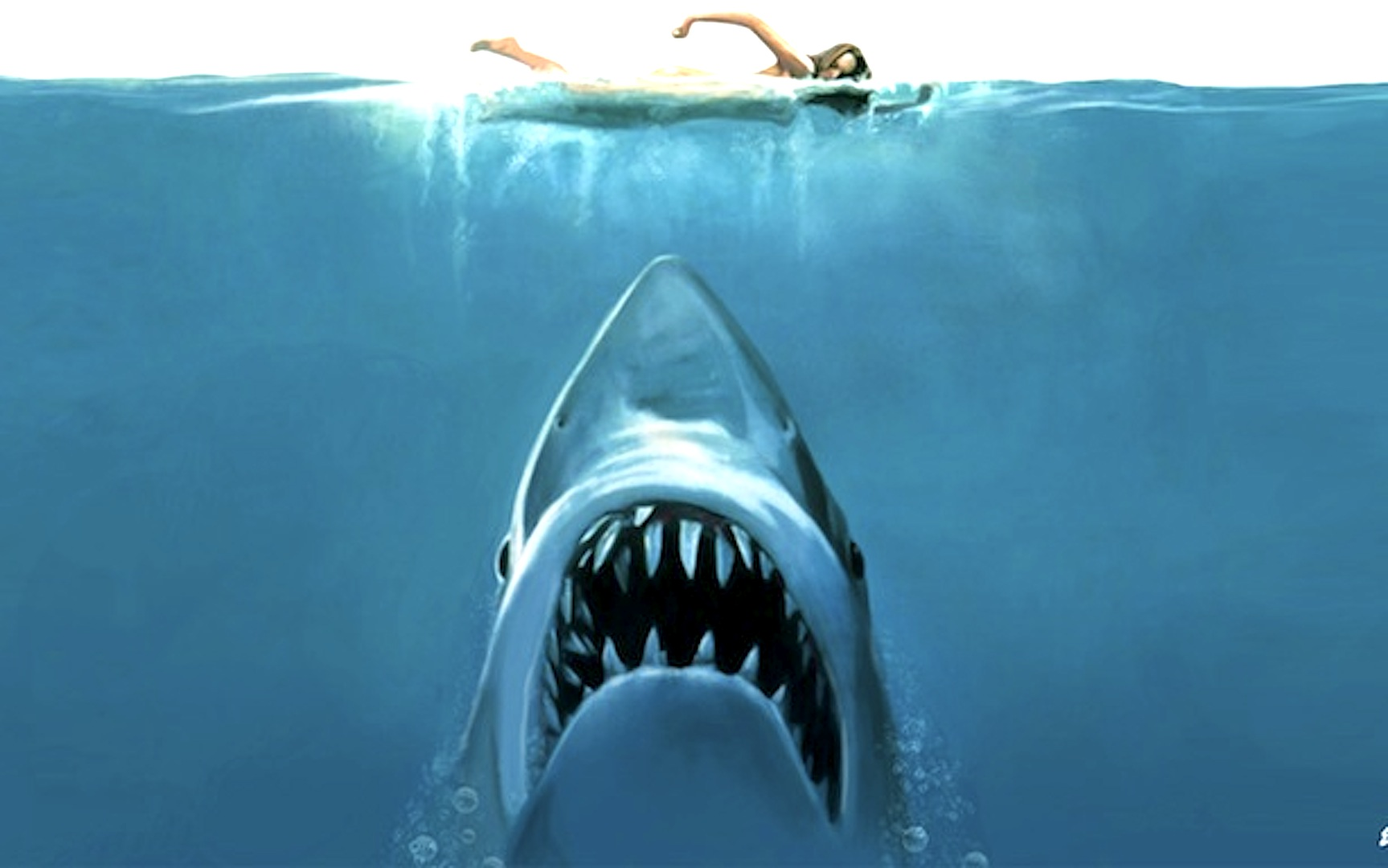 just in shark attack on nsw north coast beach grit