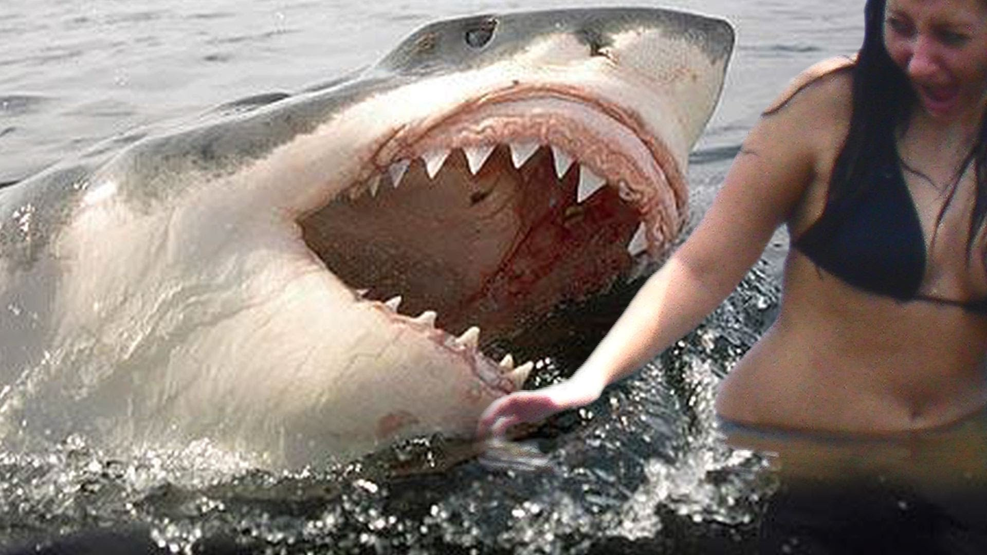 Sharks Its Extraordinary The Attacks And Number