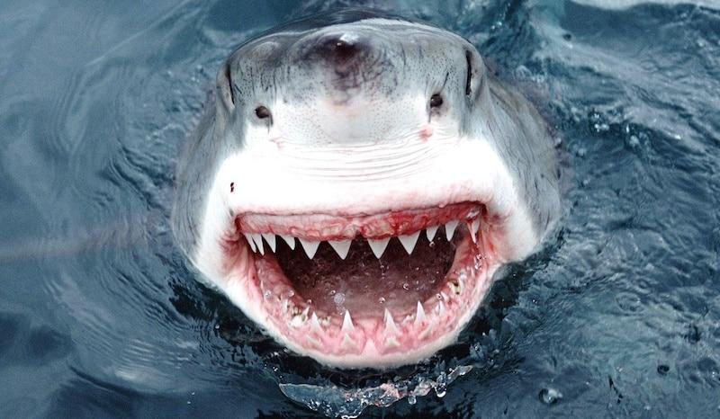 Great White Sharks Teeth Genius: Man creates yu...