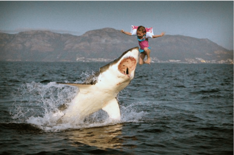 Just in: Lorde hopes shark eats poser!   BeachGrit