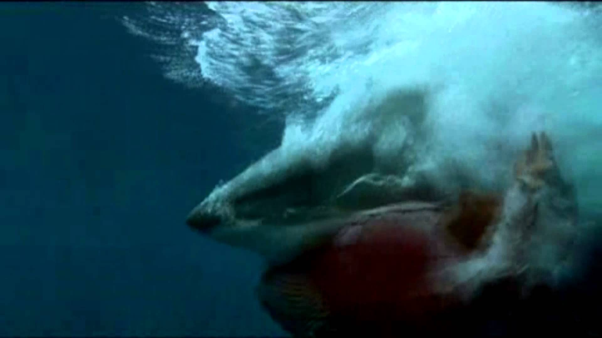 Shark Quot Knocks Quot Surfer From Board At Main Break Beachgrit