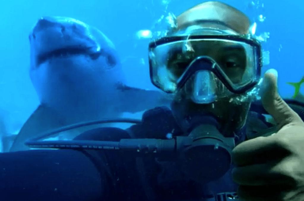 Tribute: 12-foot Great White shark named